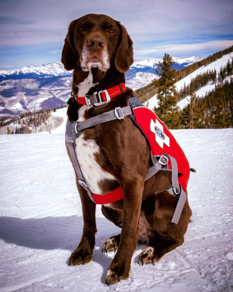 Beaver Creek Patrol Dog
