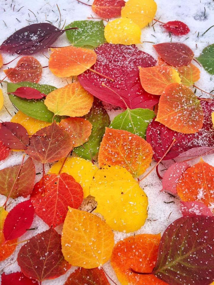 Autumn leaves with snow